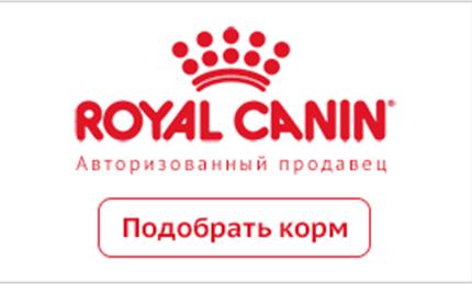 Royal Canin promo dog