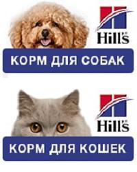 Hiils promo