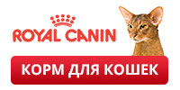 Royal Canin promo cat