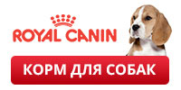 Royal Canin promo dog